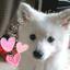 画像 日本スピッツなな&モモ&るる ☆ spitz2のブログ のユーザープロフィール画像