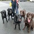 すべての犬の幸せを願って活動中☆わんラブのプロフィール