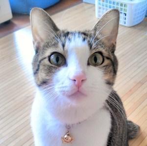 猫田サダ吉