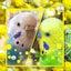 画像 小さな星の大ぼうけん。~セキセイインコ&ジャンボセキセイ~in札幌のユーザープロフィール画像