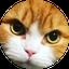 画像 まさきもち『 猫と息子と音楽と。』のユーザープロフィール画像
