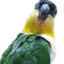 画像 ゴマのつぶやきのユーザープロフィール画像