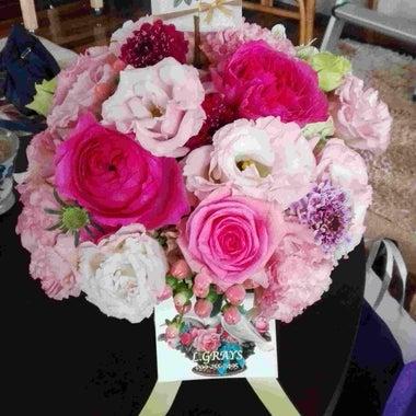 blossom-diary