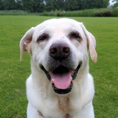 dogcare-smile