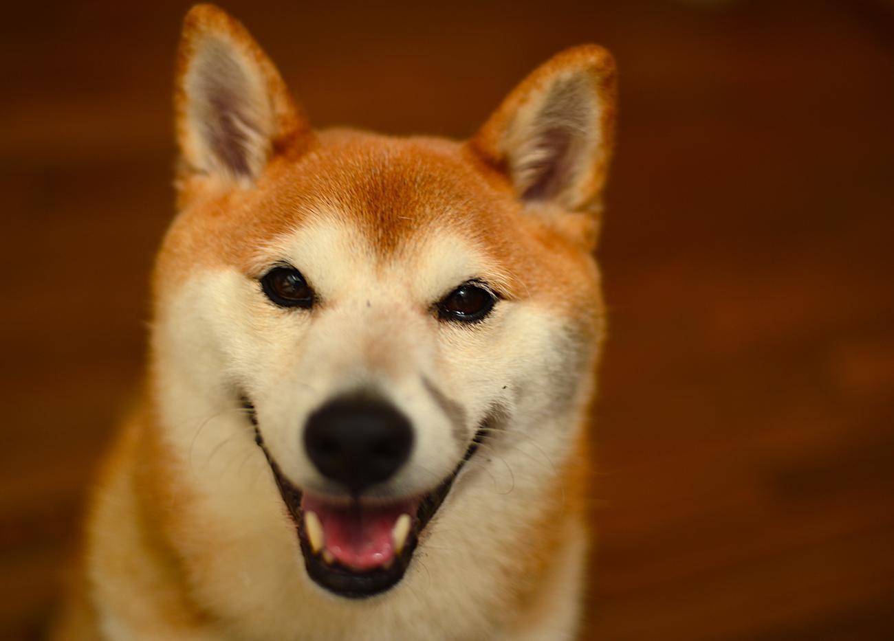 Ogojo