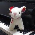 pianoのプロフィール