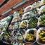 画像 家庭菜園にゃん+多肉とお花 2年生のユーザープロフィール画像