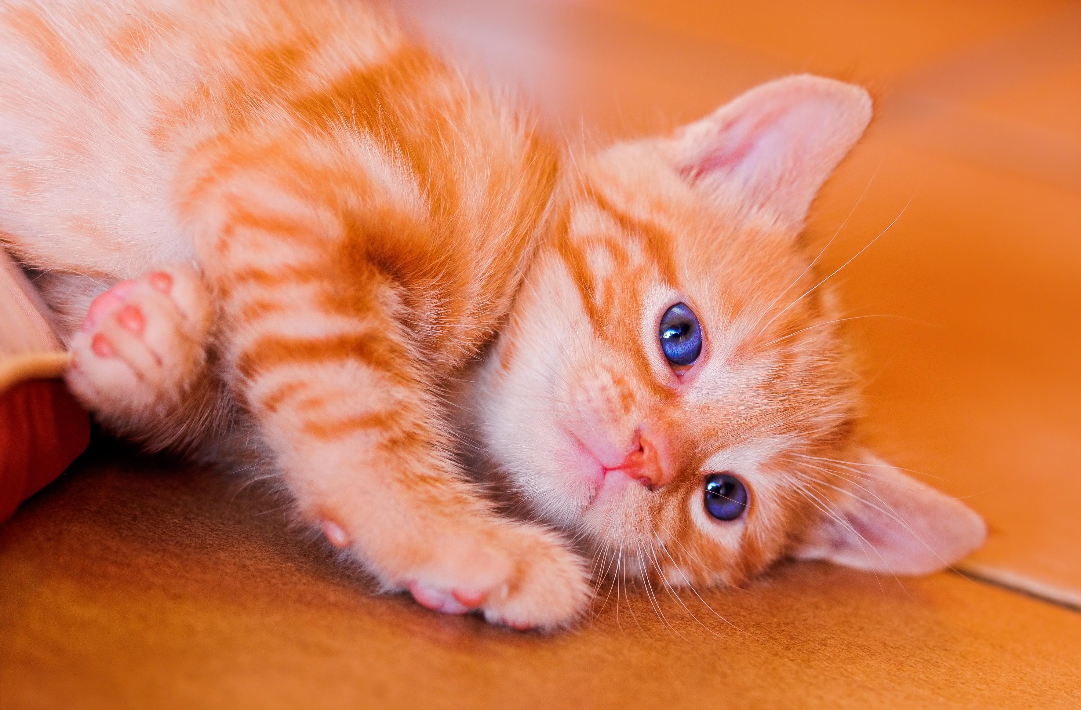 cat1234