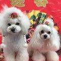 Dog Salon Tricoloreのプロフィール