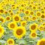 画像 敏森裕子オフィシャルブログ「ゆうこさんちの手づくり暮らし」 Powered by Amebaのユーザープロフィール画像