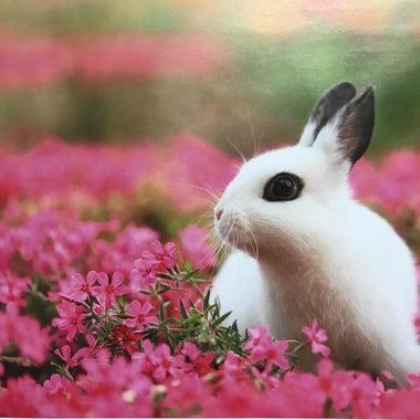 書道教室 玉兎 primrose さくら草通り教室