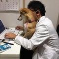 はぐれ獣医のプロフィール
