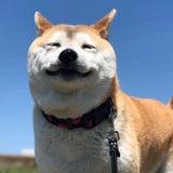 柴犬こなつのプロフィール画像