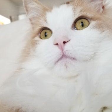 ノル猫ラテちゃん