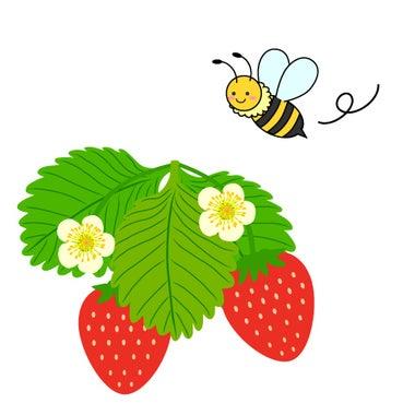 akikostrawberry369