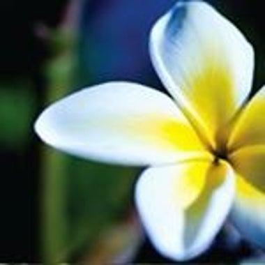 Hawaii-malina