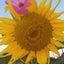 画像 mayahaya2236のブログのユーザープロフィール画像