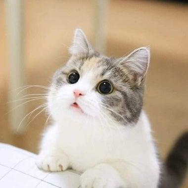happyorganic-miao