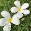 画像 あかりオフィシャルブログ「あかり貯金生活」 Powered by Amebaのユーザープロフィール画像