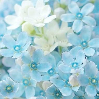 BlueStar ☆