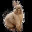 画像 SAVE THE RABBITS BLOG(うさぎの里親募集)のユーザープロフィール画像