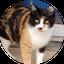 画像 老人と猫のユーザープロフィール画像