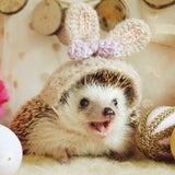 hedgehog-azukiのプロフィール画像