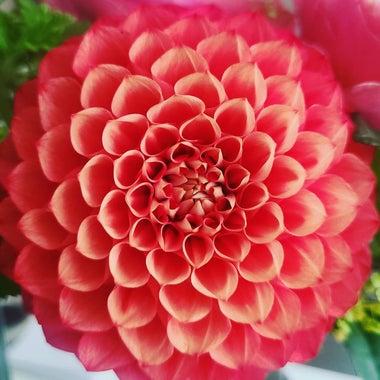 美しい花のように、光のように セラピストNAOKO