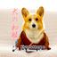 画像 【北海道コーギー】むぎん家@きよらのユーザープロフィール画像
